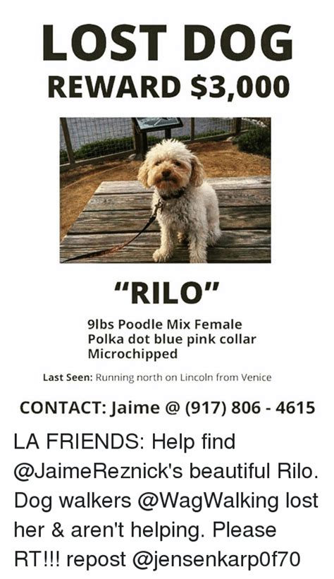 Lost Dog Meme - lost dog reward 3000 rilo 9lbs poodle mix female polka