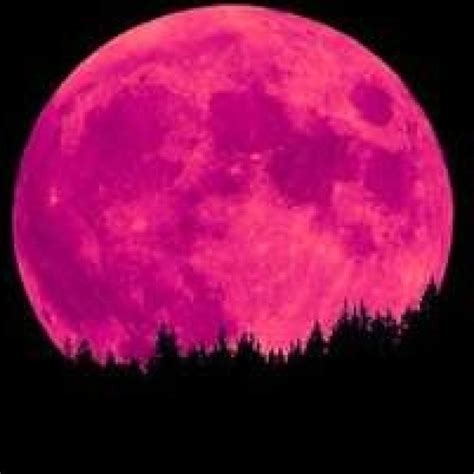 what is a pink moon pink moon pink obsession nature color pink pink hot