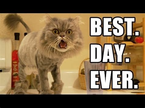 besta day best day ever episode 2 youtube