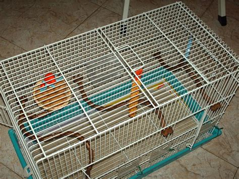 gabbia cocorita gabbia per cocoriti cocorite e pappagallini ondulati
