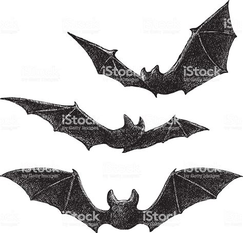 Drawing Vectors by Bats Drawing Stock Vector 489080658 Istock