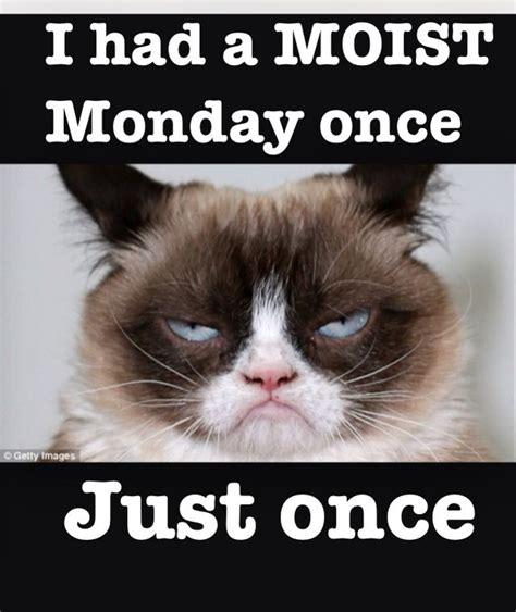 Grumpy Cat Monday Meme - 134 best moist monday memes images on pinterest