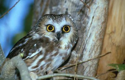 owl symbolism pure spirit owl symbolism