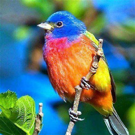 1000 images about hermosas aves on pinterest birds