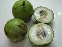 Tanaman Jadi Buah Sawo Duren Kenitu quot buah kenitu quot buah ajaib kaya akan anti oksidan petani top