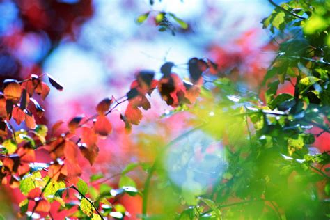 colorful wallpaper deviantart nature color blast wallpaper by clarabellafairestock on