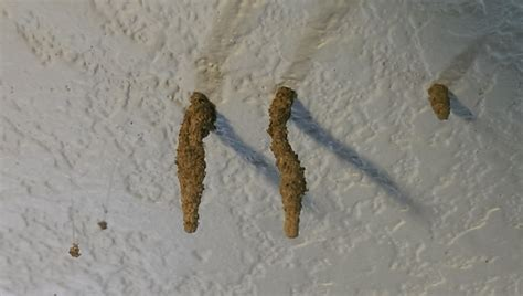 get rid of silverfish in bedroom get rid of silverfish in bedroom www redglobalmx org