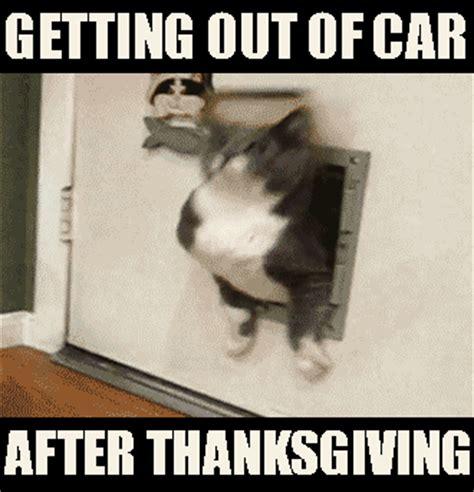 Thanksgiving Cat Meme - cat escapes funny cats