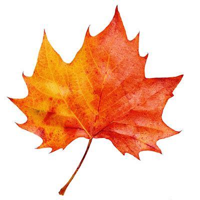 the autumn leaf test