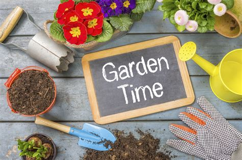 garden supplies 5 savvy ways to beautify your garden the reject shop