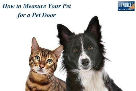 how to kennel your measuring your pet for a pet door advanced windows usa