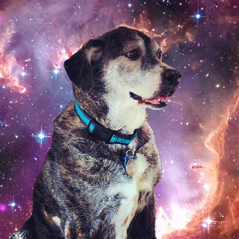 Dogs In Space 10 amazing gifs of dogs in space