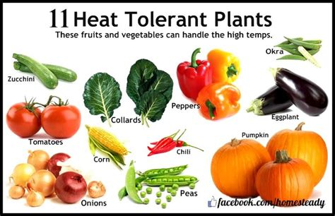 heat tolerant crops heat tolerant plants gardening pinterest