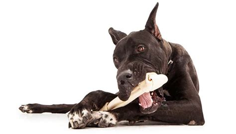is rawhide bad for puppies is rawhide bad for dogs everything you need to nextgen
