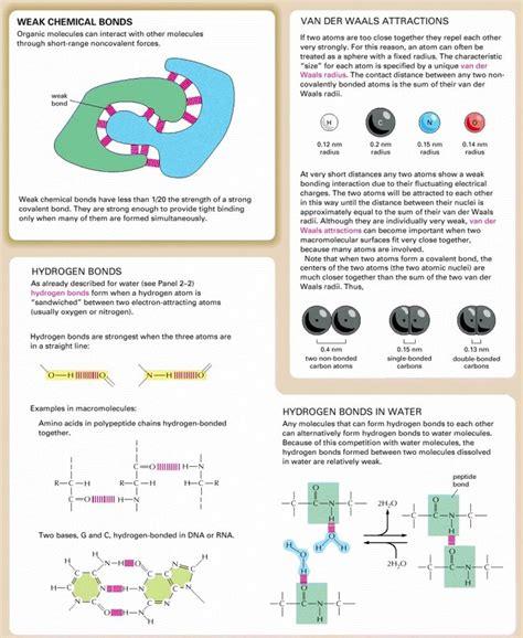 1000 ideas about molecular biology on
