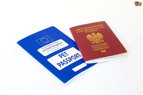 puppy passport dogs trust exposes puppy smuggling and flaws in the pet passport scheme