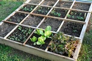 food garden rows viewing gallery