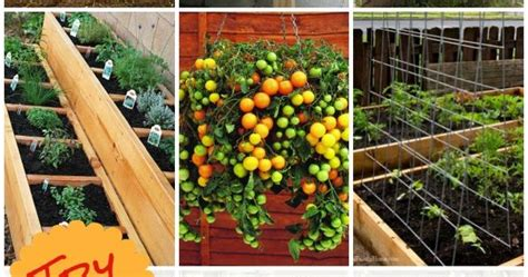 The Best Tasting Fruits And Vegetables Are Homegrown Starting A Fruit And Vegetable Garden