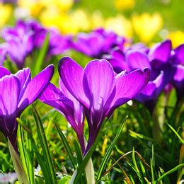 popular spring flowers most popular spring time flowers 187 blooms today