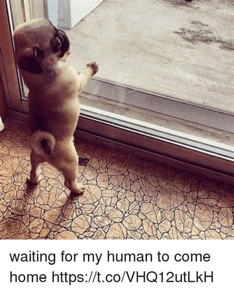 waiting for my human to come home httpstcovhq12utlkh