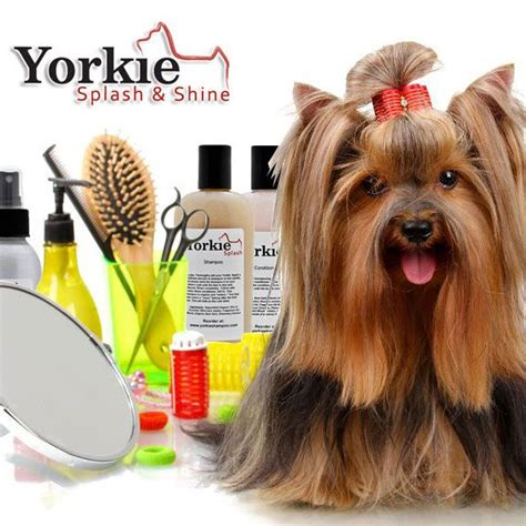 how to groom your yorkie 1000 images about yorkie haircuts on puppys grooming tips and yorkies