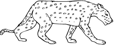 Realistic Cheetah Coloring Pages by Cheetah Coloring Pages King Of Savanna Coloring4free