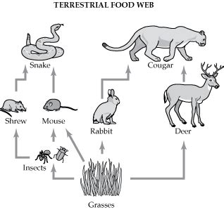 coloring pages of a food chain food chain coloring pages foodweb2 gif kyle s animal