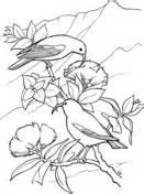 hawaiian birds coloring pages hawaiian honeycreeper coloring pages free coloring pages