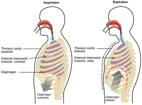 paradoxical breathing definition   treatments