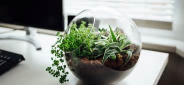 Best Desk Plant by 7 Beautiful Office Plants You Couldn T Kill If You Tried