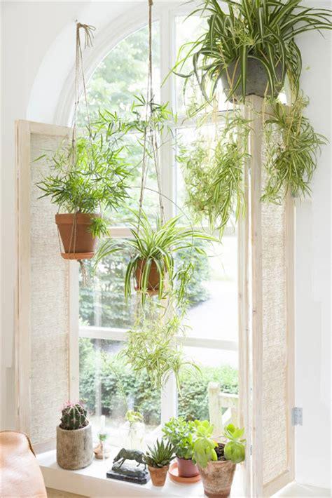 House Plants For Window Cantinho Verde Ideias Para Ter Plantas Dentro De Casa