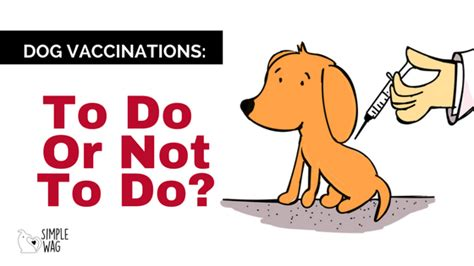 puppy not or vaccinations to do or not to do simple wag