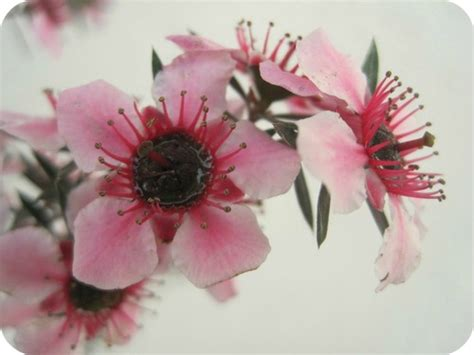 siamo come fiori prima di vedere il sole a primavera fioriture di primavera nel giardino di roberta il sito