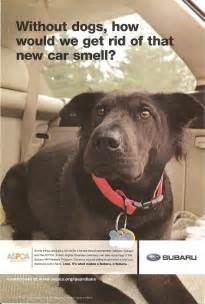 how to get your car smelling like new subaru advertising photographs page 4