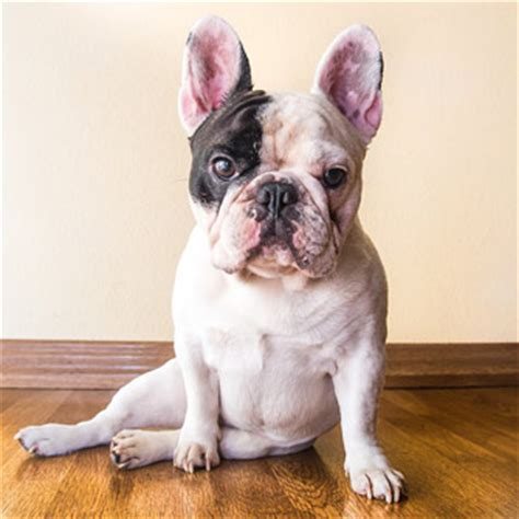 7 tips for turning your pet into an instagram star