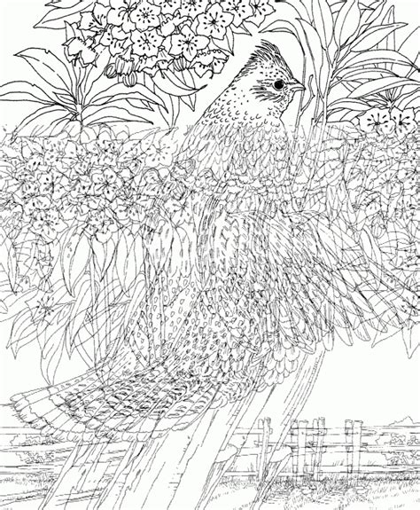 free coloring pages for adults nature coloring pages free printable nature coloring pages for