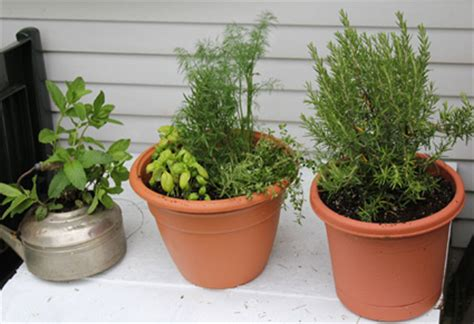 how to grow a herb garden in pots growing herbs in pots why growing herbs in pots might be