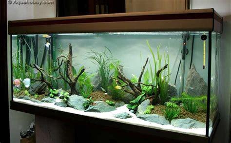 aquarium decoration ideas freshwater 203 best aquarium setups images on pinterest fish tanks