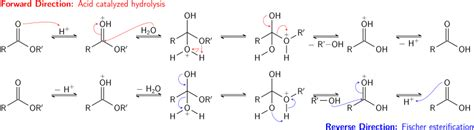 difference b w hydration and hydrolysis file fischer esterification hydrolysis equilibrium svg