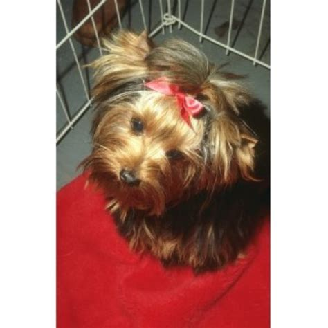 dogs bowling green ky grooming services and groomers in kentucky freedoglistings