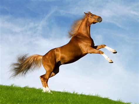 wallpaper horse free download horse wallpaper free download desktop hd wallpapers