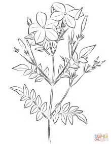coloring pages of jasmine flower flower coloring pages coloring pages jasmine flower