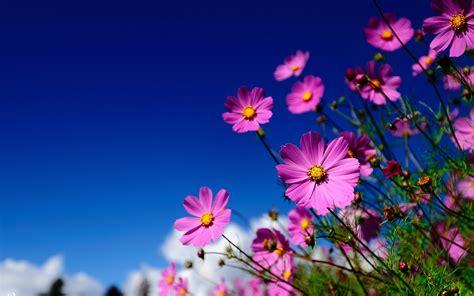 hd flower meadow wallpaper meadow flowers wallpapers ka kwietna pinterest wallpaper