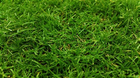 images of green grass 183 free stock photo