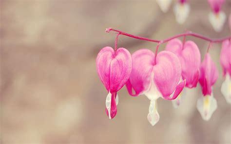 cute love heart wallpaper hd  pink heart wallpapers