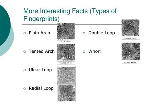 pattern types ppt ppt can fingerprint patterns be inherited powerpoint