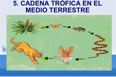 cadenas troficas terrestres ejemplos ecosistema