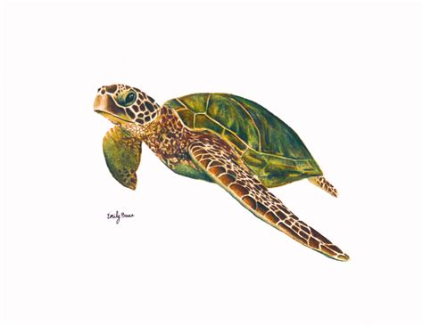 turtles colors sea sea tortoise pencil and in color
