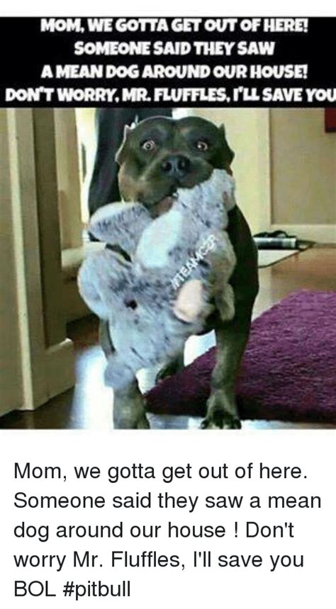 Dog Mom Meme - 25 best memes about gotta get out of here gotta get out