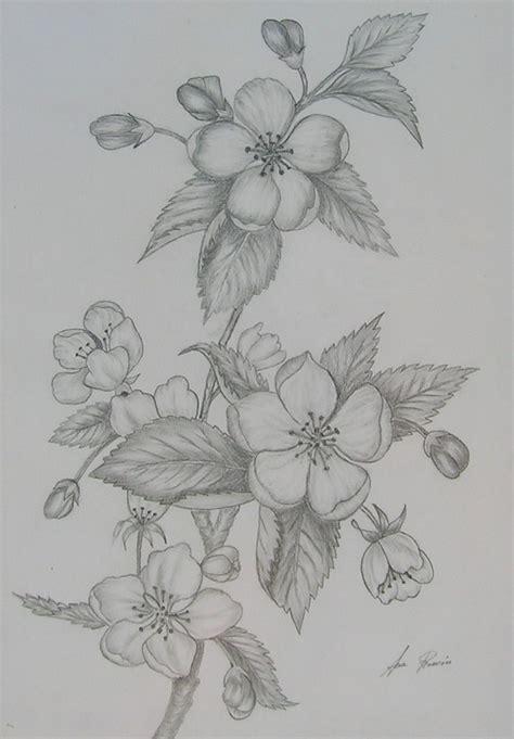 imagenes de rosas hechas a lapiz rosas a carboncillo imagui